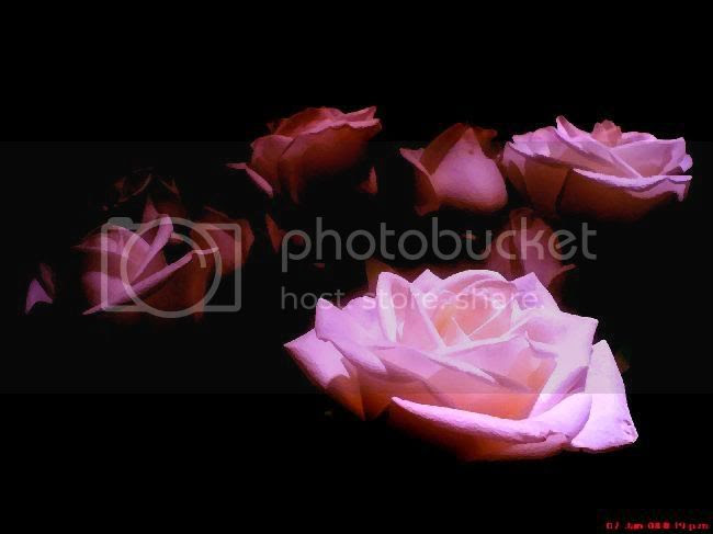 Rosas Pictures, Images and Photos