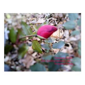 Red Rosebud Frozen Postcard