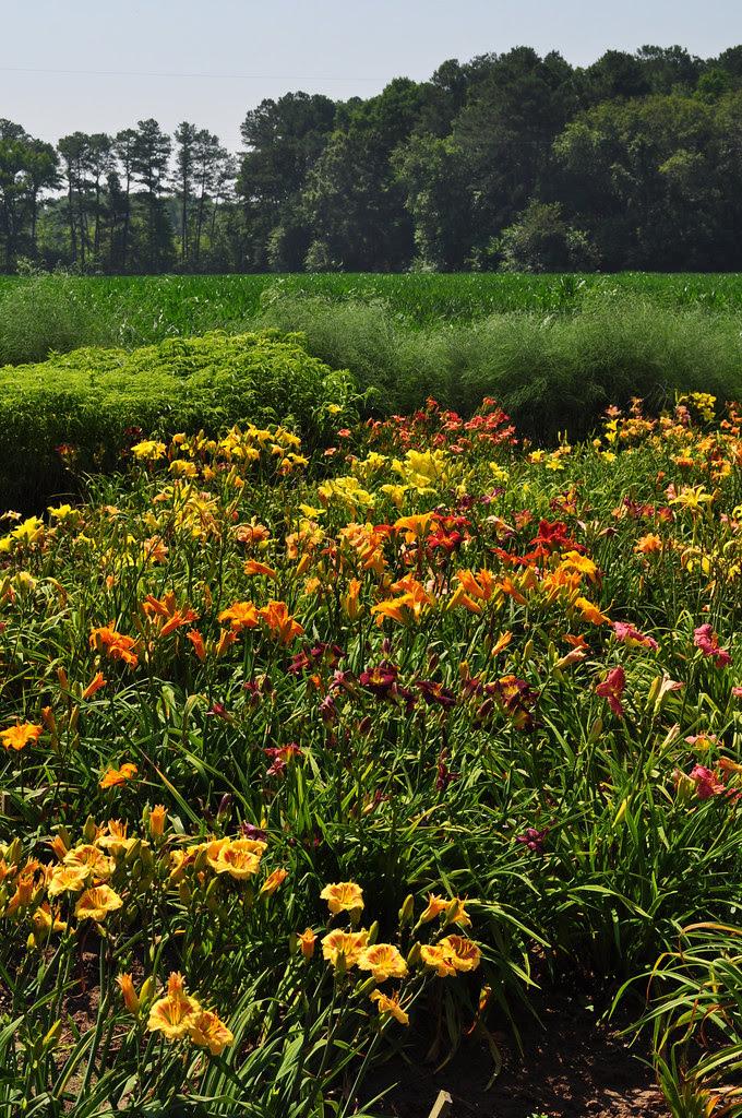 Sterrett Gardens (7)