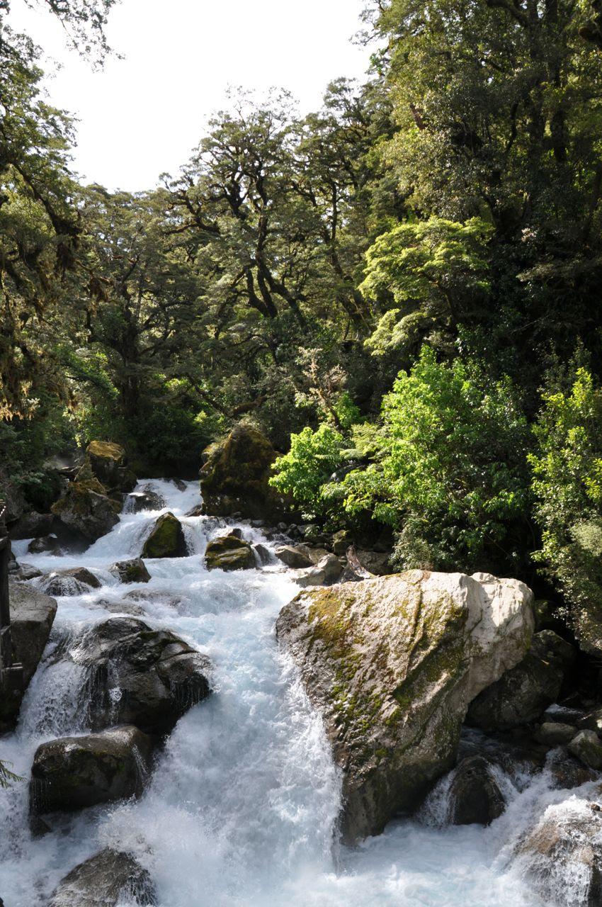 Dijkstra's in Nieuw Zeeland -