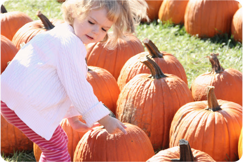 EB picking pumpkin web.jpg