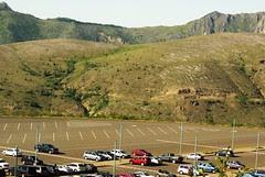 2008-08-22 post candidates Mt St Helens Dead forrest (1)