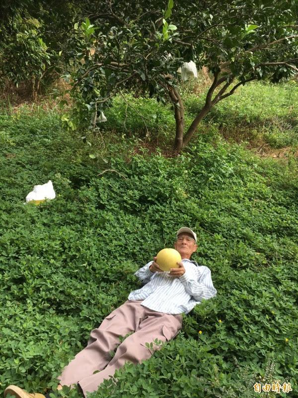 王子建在果樹下種「多年生花生」從此不用噴除草劑。(記者顏宏駿攝)