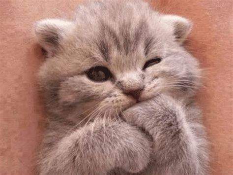 gambar dp bbm kucing lucu imut bikin gemes terbaru