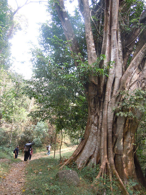 Brahmagiri_Trek_Path1