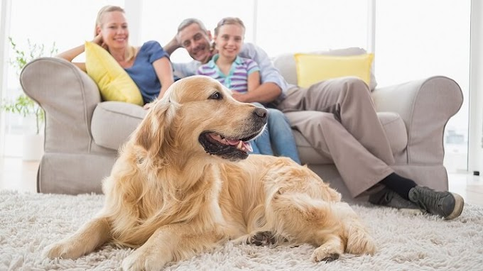 Consejos para limpiar una casa en la que hay mascotas