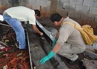 Caxias tem alto risco de surto de dengue