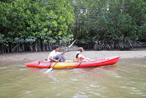 Kayaking in the mangroves, Phuket