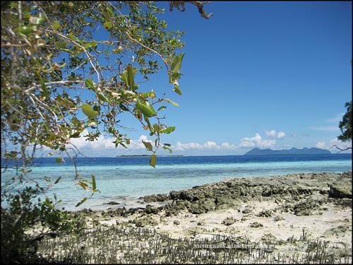 beach sand and tree