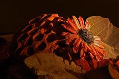 dried_garden