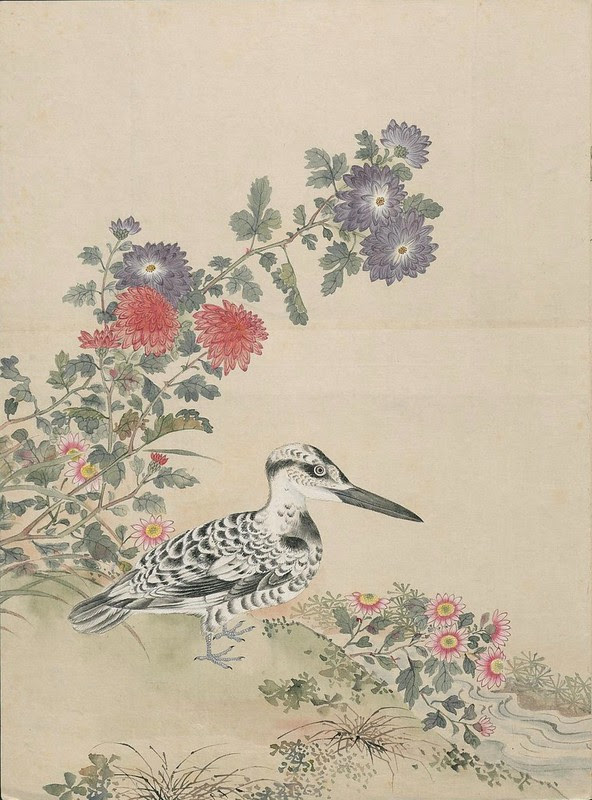 Ink + Watercolour  Bird sketch f
