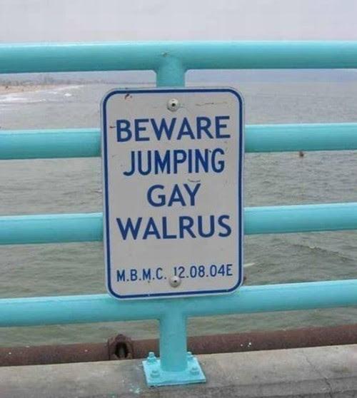 gay, walrus