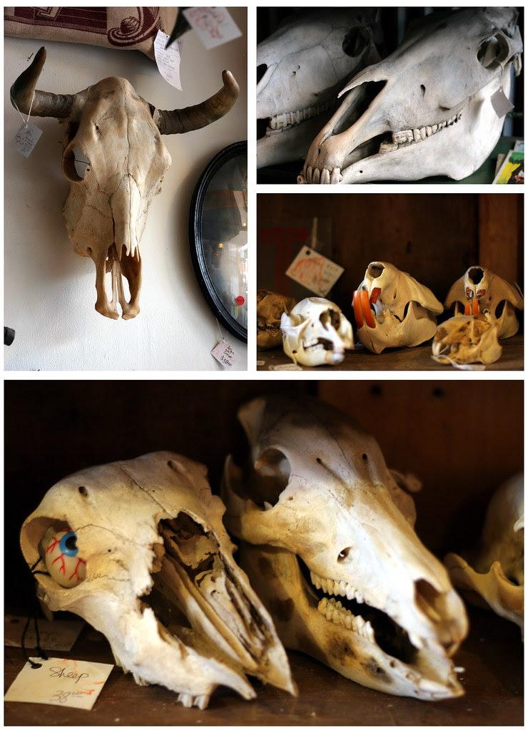 Woolly Mammoth Skulls