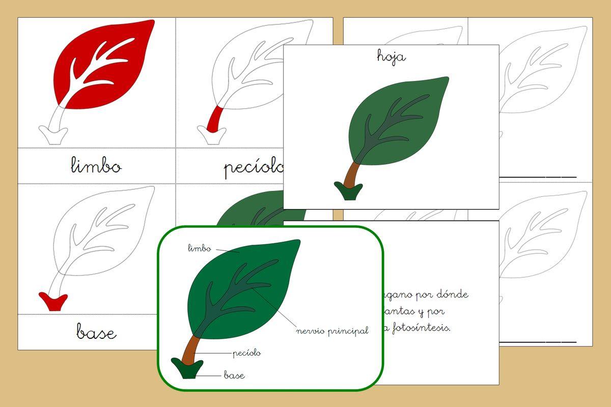Imprimibles Creciendo Con Montessori