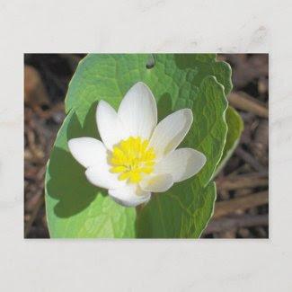 Maine Spring postcard