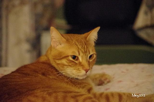 2012_09_30_2012 cats 031
