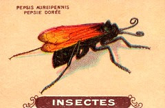 insecte 5