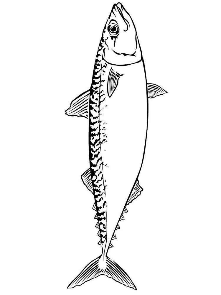 Tuna Colouring Pages Sketch Coloring Page