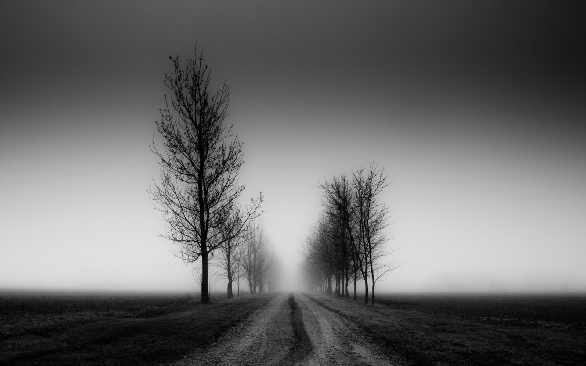 Black And White Nature Wallpaper 60 Images