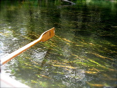 Dipping an oar into the Wakulla
