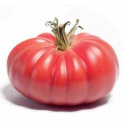 Pomidor Monterosa F1 250 Nasion Toma Seeds
