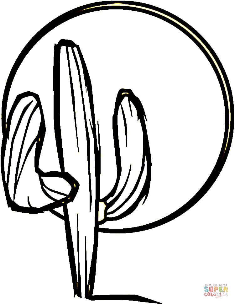 Dibujo De Cactus Para Colorear Dibujos Para Colorear Imprimir Gratis