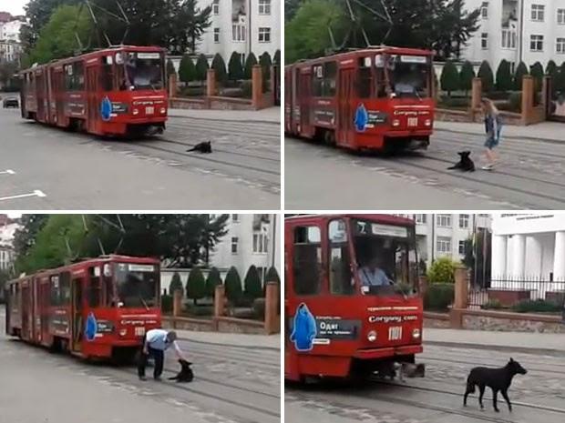 "Cachorro ""preguioso"" no se levanta dos trilhos do bonde por nada.  (Foto: Reproduo)"