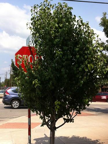 Stop Peeking Around A Tree. by seanclaes