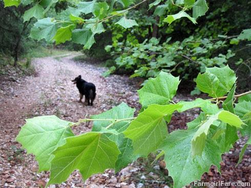 (1) Lucky Buddy Bear in the creekbed after the rain - FarmgirlFare.com