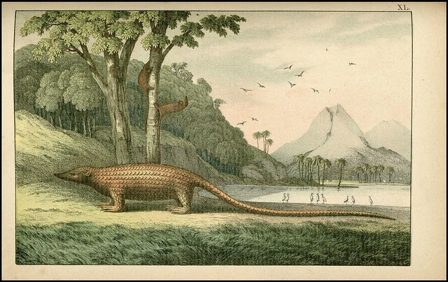 zoological chromolithograph - Le pangolin