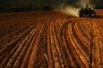Jakey Planting Alfalfa II