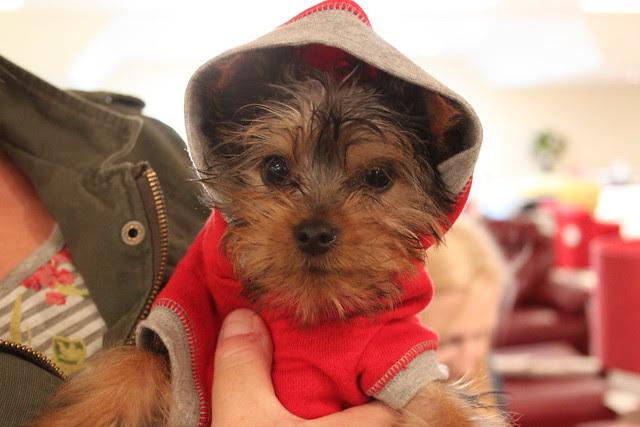 A Canine Customer