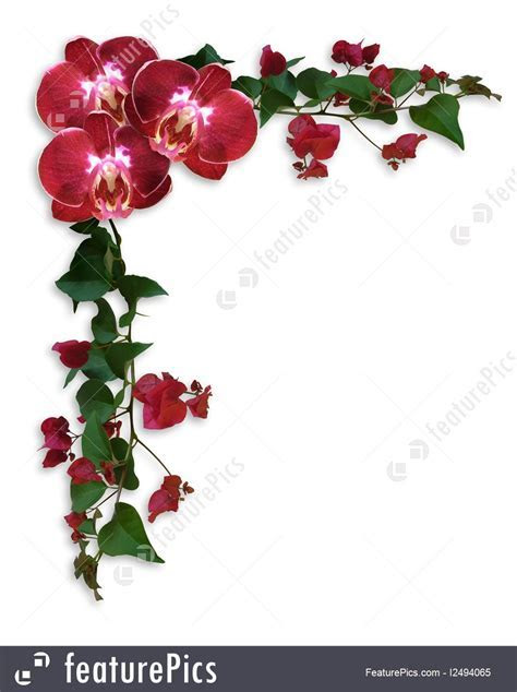 Orchids And Bougainvillea Floral Border Stock Illustration