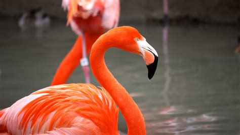 wallpaper flamingo sun diego zoo bird red plumage