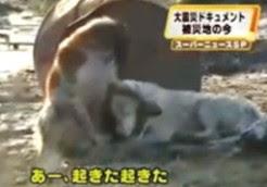 perro_amigo_tsunami_japon.jpg