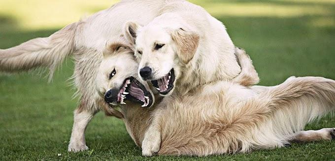 Cómo detener una pelea entre perros