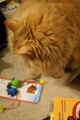 Jasper checking out the new mice