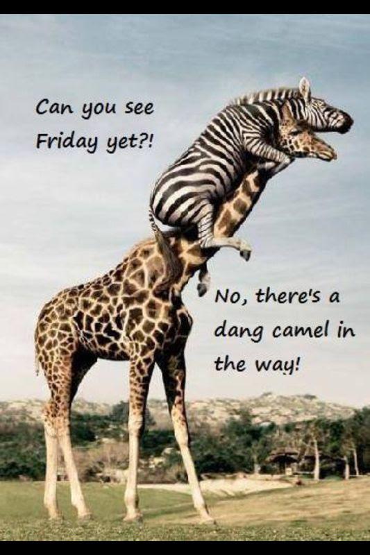 Hump day!! | Hahah | Pinterest