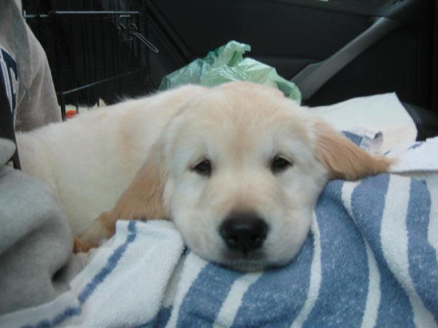 Such a Precious Puppy! (15 pics)