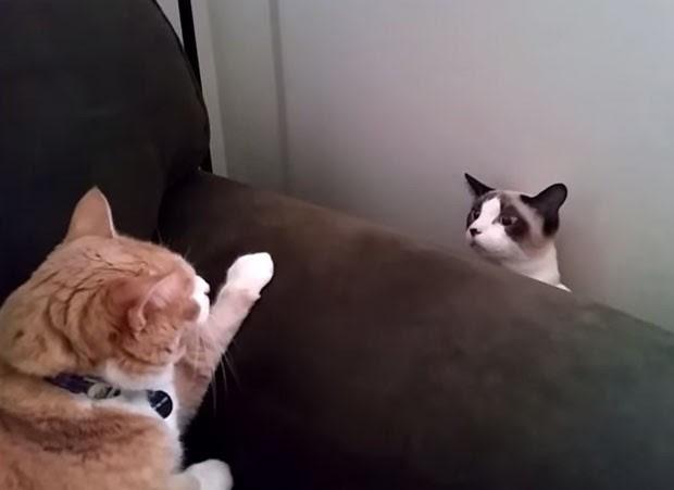 Troca de olhares entre gatos virou hit após bichano soltar encarada feroz para outro animal (Foto: Reprodução/YouTube/Ben Frisch)