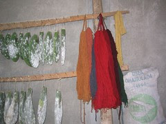 Growing Cochineal and Drying Yarn