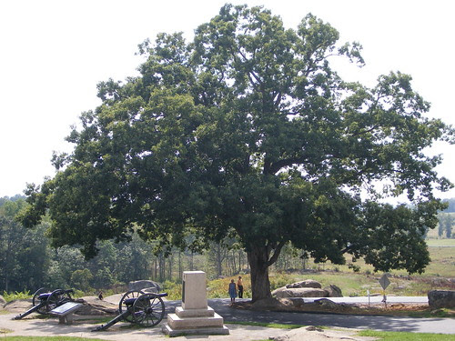 Tree that was standing during Gettysburg