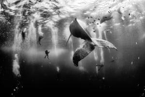 A humpback whale and her newborn calf cruise around Roca Partida island, in Revillagigedo, Mexico