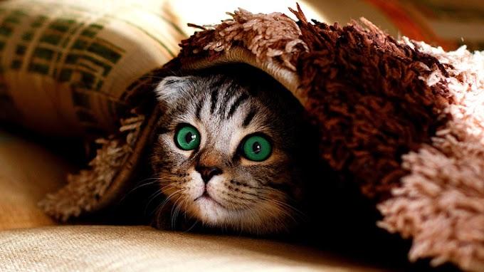 A mi gato le gusta esconderse: ¿por qué?
