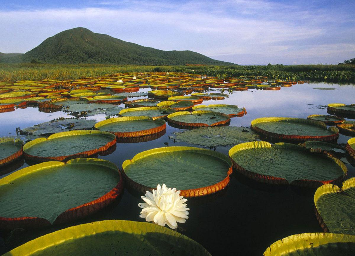 Fotografias que celebram a beleza da Terra 23