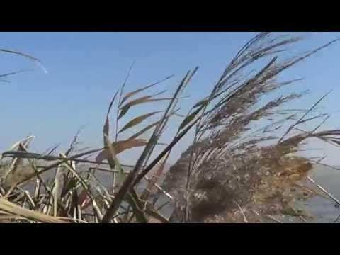 Комерчиская охота на утку в крыму