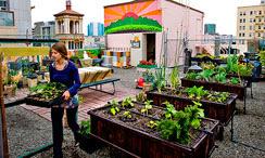 Adopte un estilo de vida ecológico en Bogotá