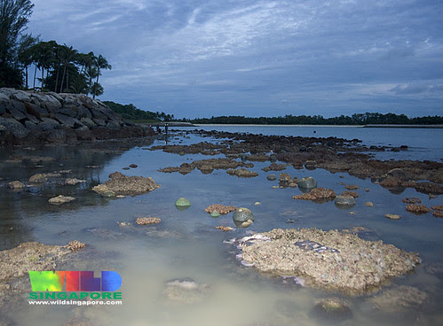 Living reefs of Kusu Island