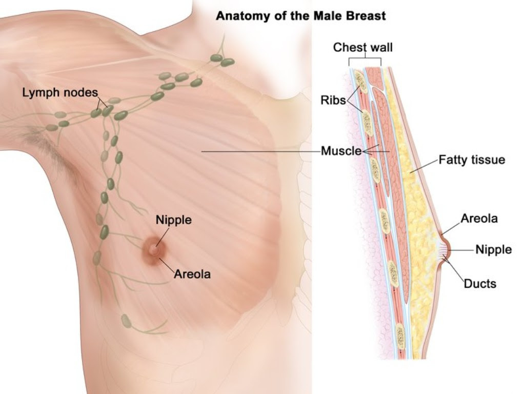 Usually, men in the age group of 60-70 years are most likely to suffer from breast cancer. Image credit: CDC