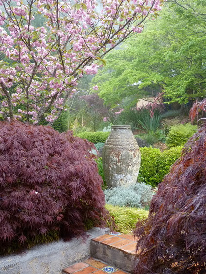 Gainesville Landscape Design Plant Of The Month Japanese Maple
